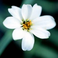 White_flowerbefore