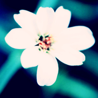 White_flowerblue_shadows_peach_high