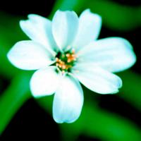 White_flowergreenshadows_blue_highl
