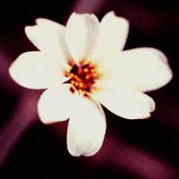 White_flowermuted_velvia_xpro_lomo_