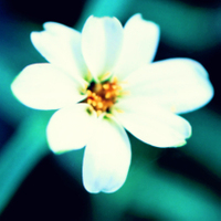 White Flower Xpro Effect